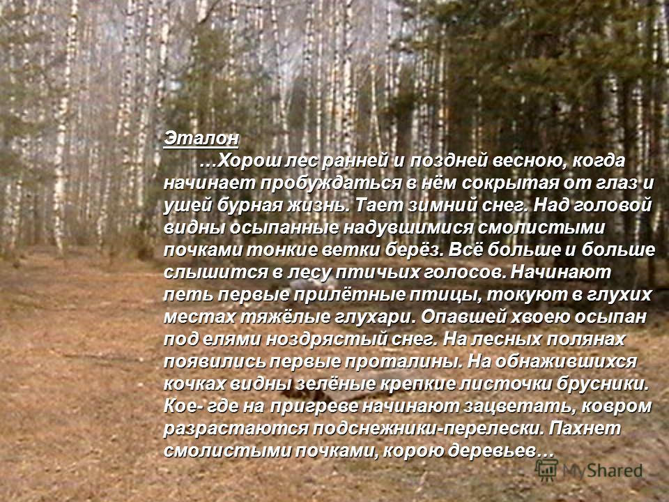 Эталон …Хорош лес ранней и поздней весною, когда начинает пробуждаться в нём сокрытая от глаз и ушей бурная жизнь. Тает зимний снег. Над головой видны осыпанные надувшимися смолистыми почками тонкие ветки берёз. Всё больше и больше слышится в лесу пт