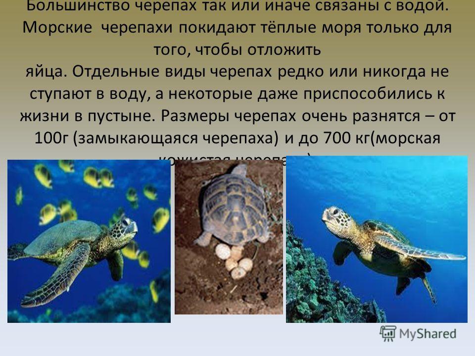 Большинство черепах так или иначе связаны с водой. Морские черепахи покидают тёплые моря только для того, чтобы отложить яйца. Отдельные виды черепах редко или никогда не ступают в воду, а некоторые даже приспособились к жизни в пустыне. Размеры чере