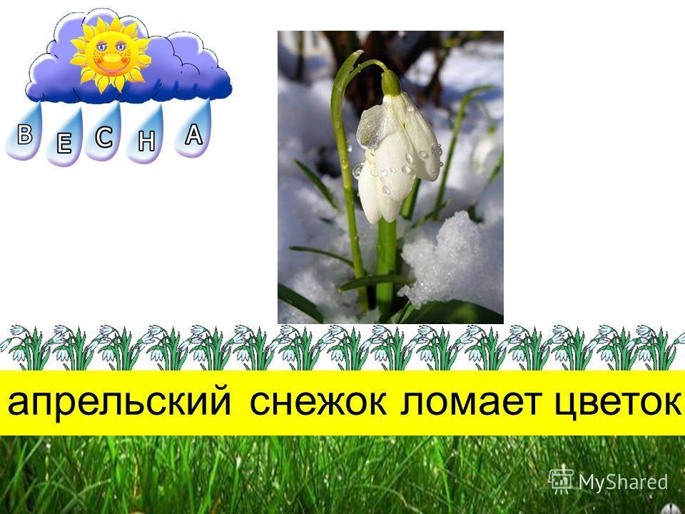 апрельскийснежокломаетцветок