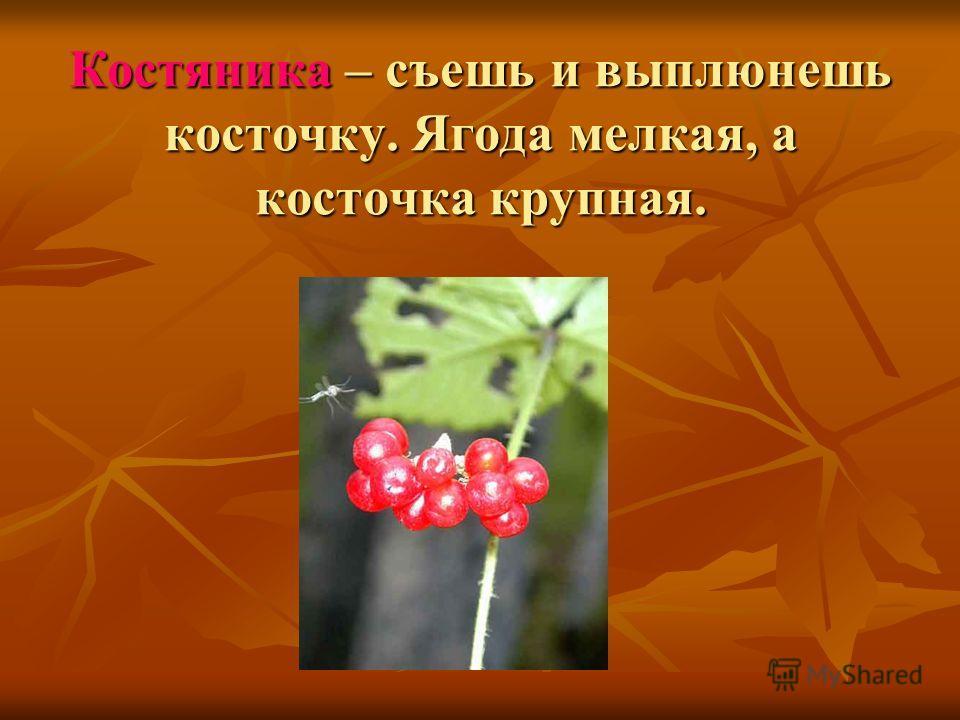 Костяника – съешь и выплюнешь косточку. Ягода мелкая, а косточка крупная.