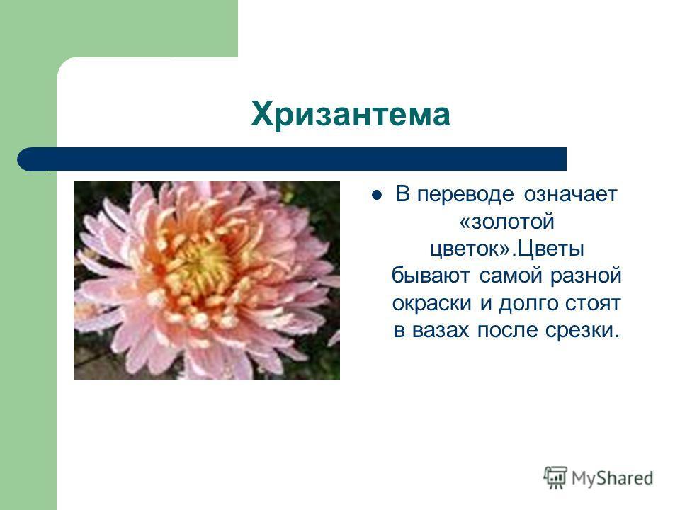 Хризантема В переводе означает «золотой цветок».Цветы бывают самой разной окраски и долго стоят в вазах после срезки.