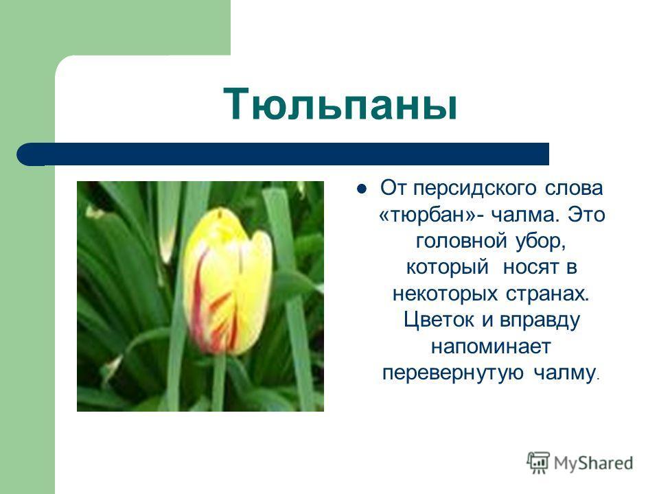 Тюльпаны От персидского слова «тюрбан»- чалма. Это головной убор, который носят в некоторых странах. Цветок и вправду напоминает перевернутую чалму.