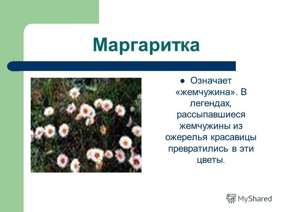 Маргаритка Означает «жемчужина». В легендах, рассыпавшиеся жемчужины из ожерелья красавицы превратились в эти цветы.