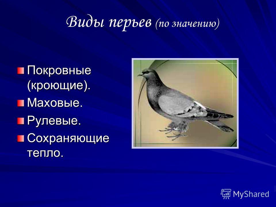 Виды перьев (по значению) Покровные (кроющие). Маховые. Рулевые. Сохраняющие тепло.