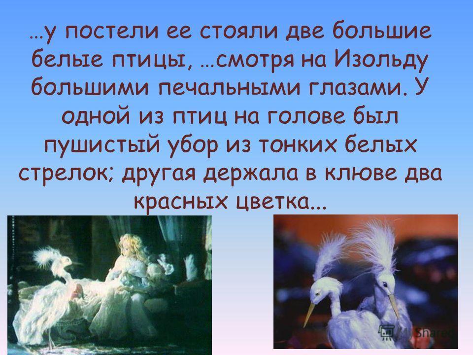 …у постели ее стояли две большие белые птицы, …смотря на Изольду большими печальными глазами. У одной из птиц на голове был пушистый убор из тонких белых стрелок; другая держала в клюве два красных цветка...