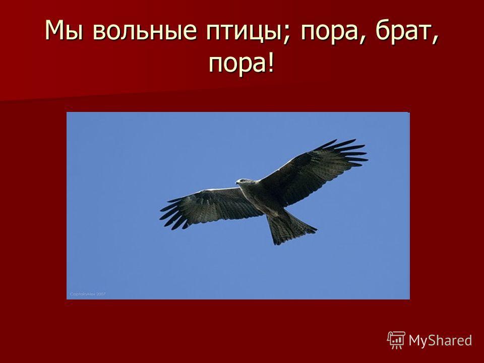 Мы вольные птицы; пора, брат, пора!