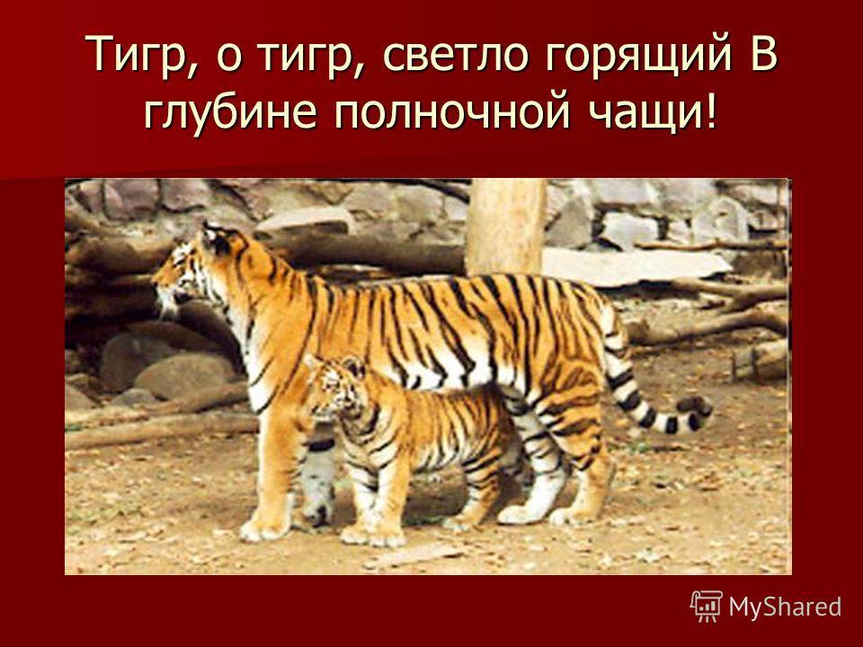 Тигр, о тигр, светло горящий В глубине полночной чащи!