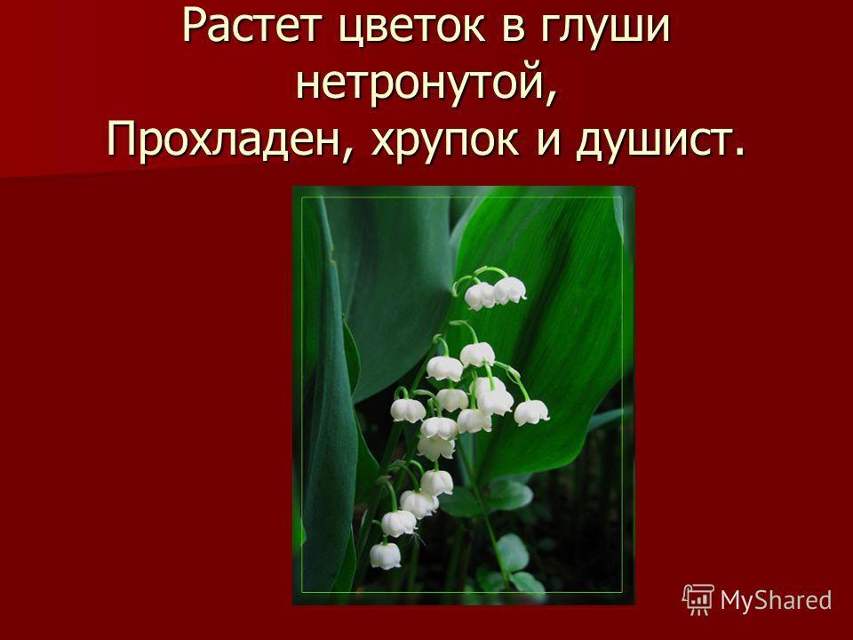 Растет цветок в глуши нетронутой, Прохладен, хрупок и душист.