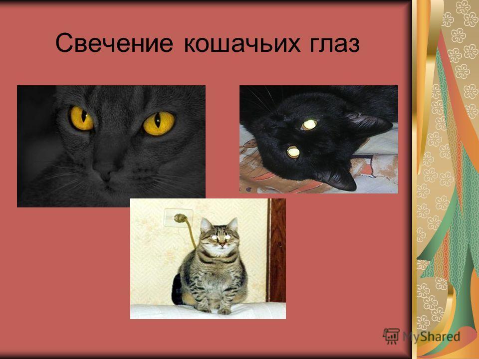 Свечение кошачьих глаз