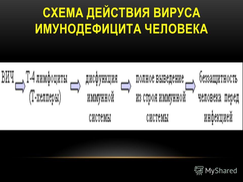 СХЕМА ДЕЙСТВИЯ ВИРУСА ИМУНОДЕФИЦИТА ЧЕЛОВЕКА