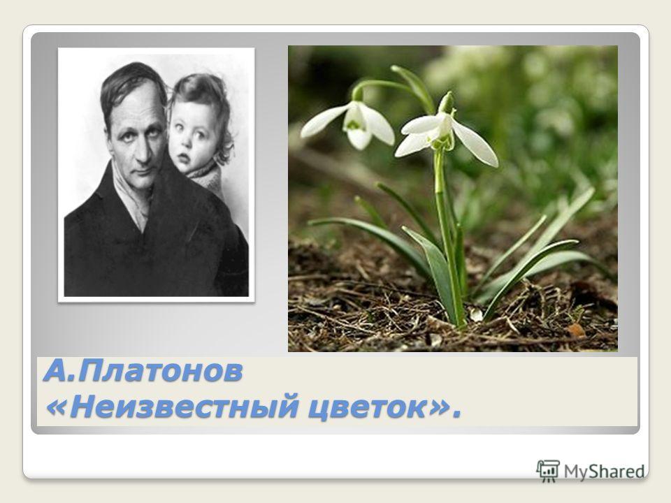 А.Платонов «Неизвестный цветок».