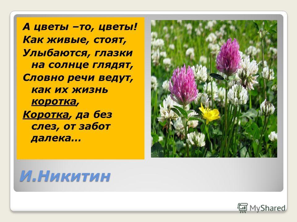 И.Никитин А цветы –то, цветы! Как живые, стоят, Улыбаются, глазки на солнце глядят, Словно речи ведут, как их жизнь коротка, Коротка, да без слез, от забот далека…