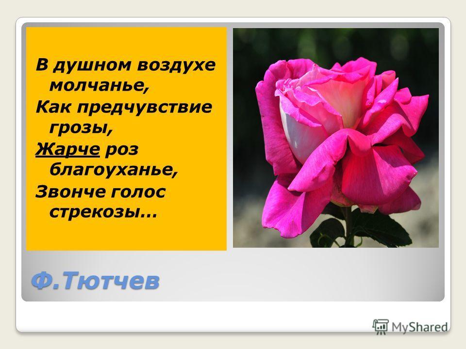 Ф.Тютчев В душном воздухе молчанье, Как предчувствие грозы, Жарче роз благоуханье, Звонче голос стрекозы…