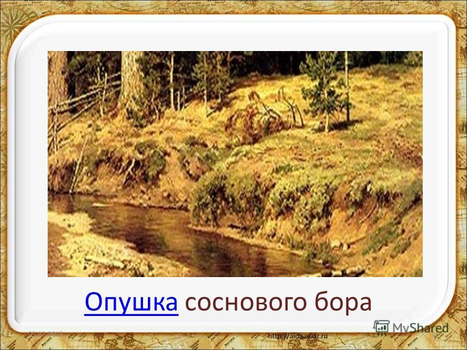 ОпушкаОпушка соснового бора 03.12.201315