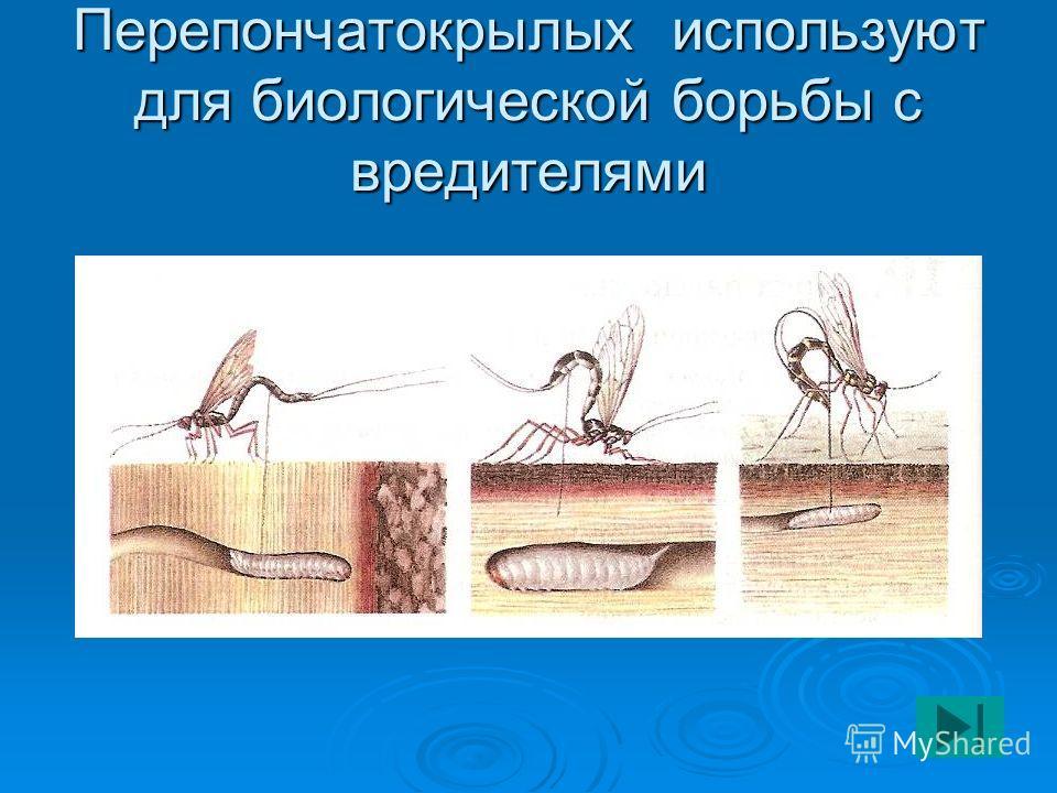 Перепончатокрылых используют для биологической борьбы с вредителями