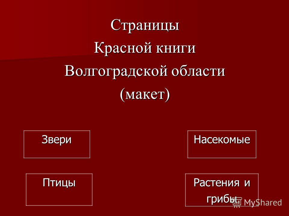 Страницы Красной книги Волгоградской области (макет) Звери Птицы Насекомые Растения и грибы