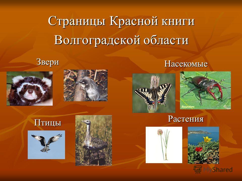 Страницы Красной книги Волгоградской области Звери Птицы Насекомые Растения