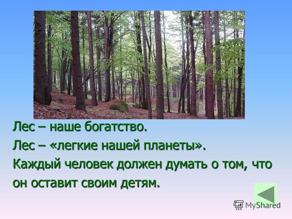 Лес – наше богатство. Лес – «легкие нашей планеты». Каждый человек должен думать о том, что он оставит своим детям.