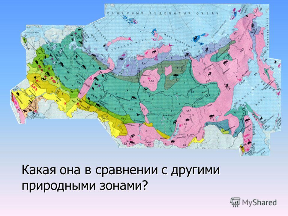 Какая она в сравнении с другими природными зонами?