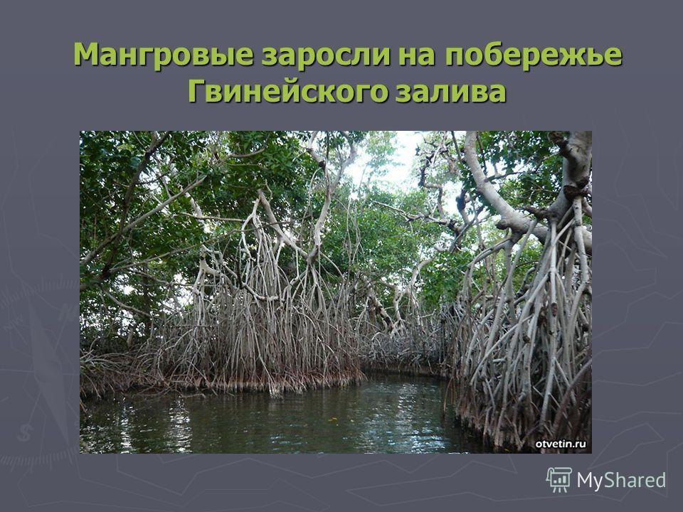 Мангровые заросли на побережье Гвинейского залива