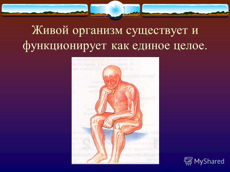 Эндокринный аппарат
