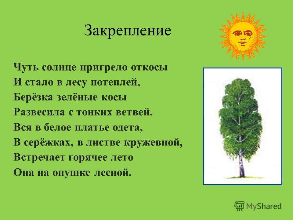 Закрепление Чуть солнце пригрело откосы И стало в лесу потеплей, Берёзка зелёные косы Развесила с тонких ветвей. Вся в белое платье одета, В серёжках, в листве кружевной, Встречает горячее лето Она на опушке лесной.