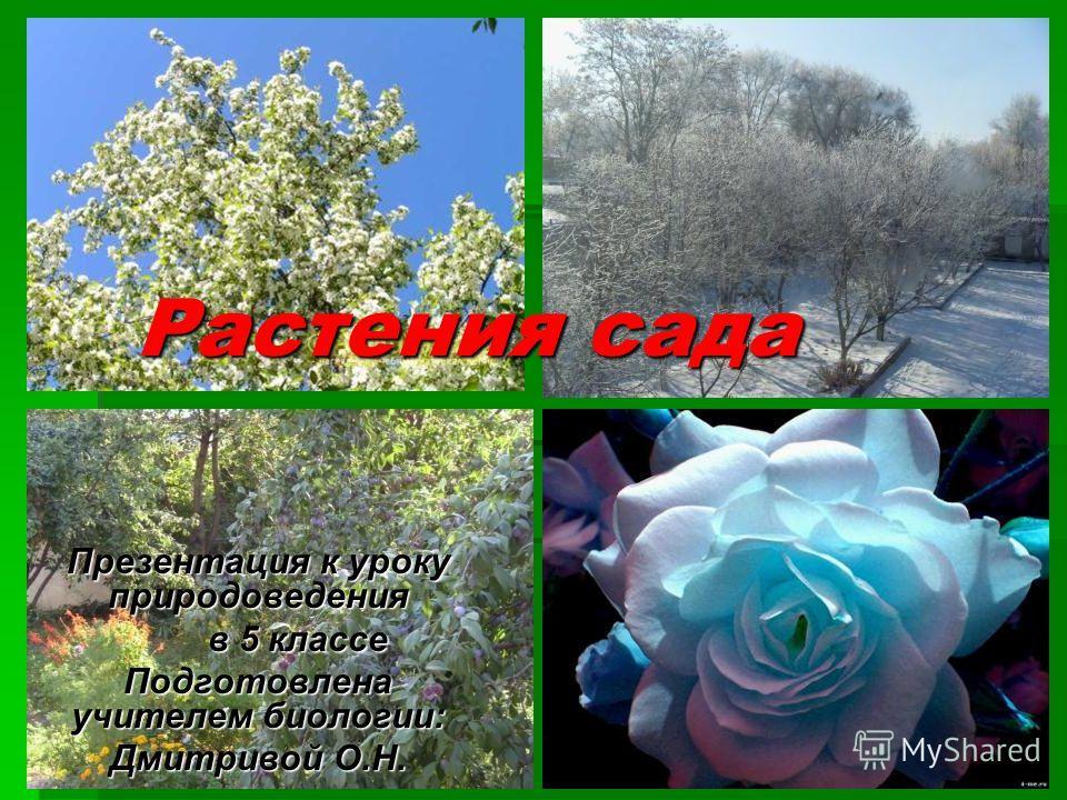 Растения сада Презентация к уроку природоведения в 5 классе в 5 классе Подготовлена учителем биологии: Дмитривой О.Н.