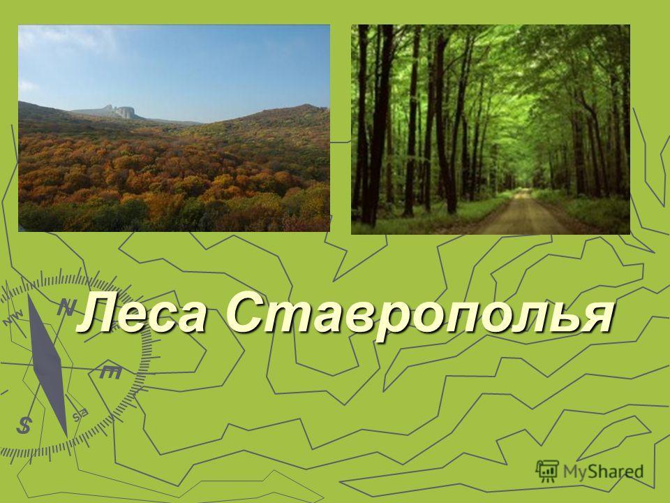 Леса Ставрополья