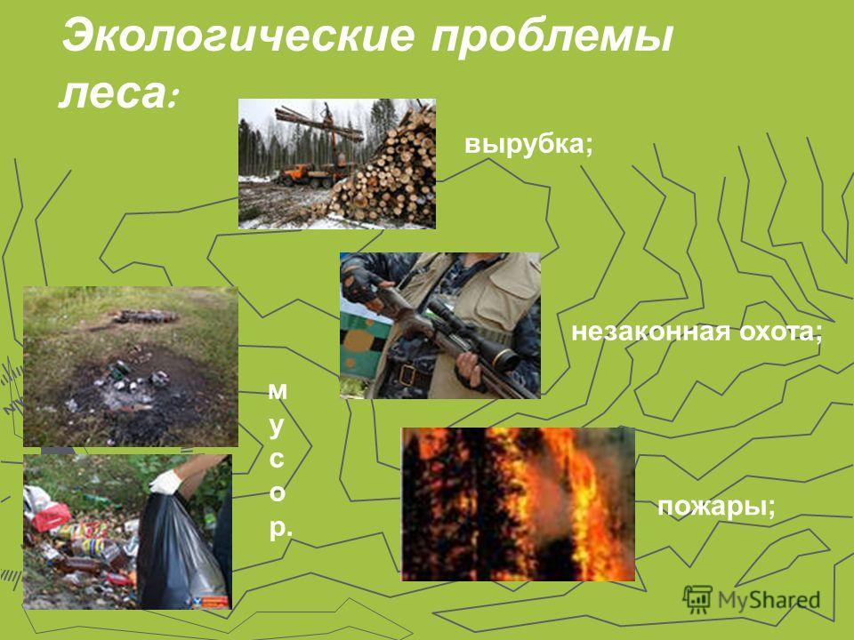 Экологические проблемы леса : вырубка; незаконная охота; пожары; м у с о р.