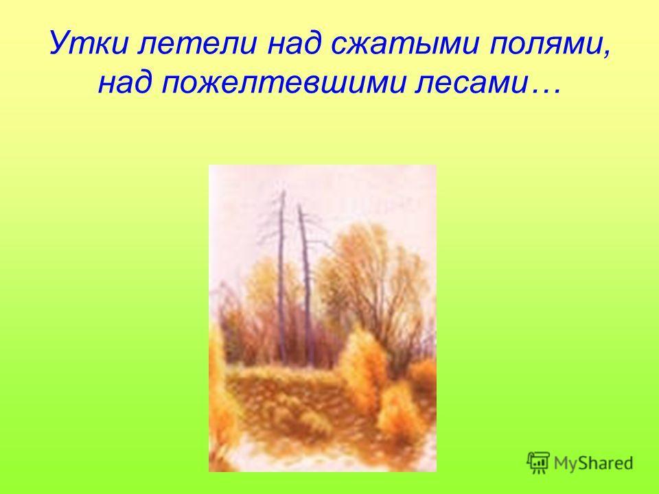 Утки летели над сжатыми полями, над пожелтевшими лесами…