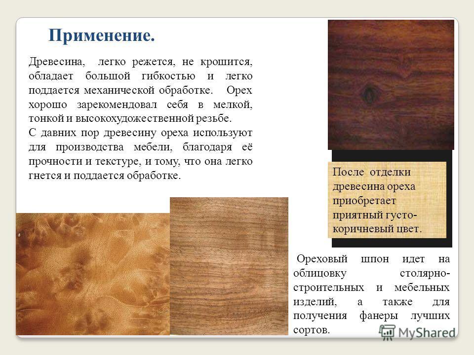 Орех грецкий Растения этого вида достигают огромных размеров и глубокой старости. В диком состоянии грецкий орех растёт в Закавказье, в северном Китае, в северной Индии, в Тянь-Шайне, в Персии, в Малой Азии и Греции. В России в Петербурге грецкий оре