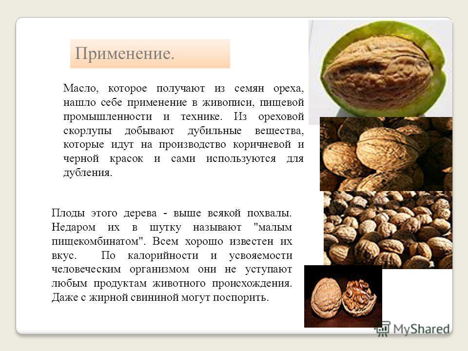 Применение. После отделки древесина ореха приобретает приятный густо- коричневый цвет. Древесина, легко режется, не крошится, обладает большой гибкостью и легко поддается механической обработке. Орех хорошо зарекомендовал себя в мелкой, тонкой и высо