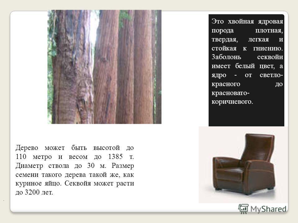 Секвойя - самое крупное и долговечное дерево планеты. История. Индейское племя ирокезов в Северной Америке: желая увековечить память своего выдающегося вождя Секву, они присвоили его имя одному из самых необычных и величественных деревьев. Секвойя -