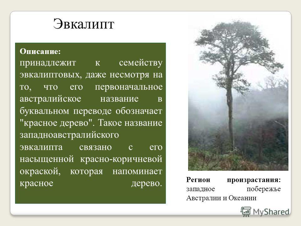 Экзотические деревья