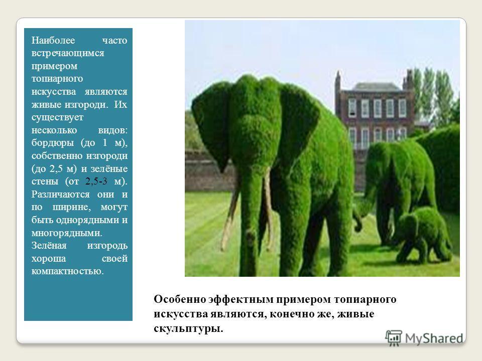 Топиарное искусство - растительная скульптура Топиарным искусством называют фигурную стрижку кустарников и деревьев.