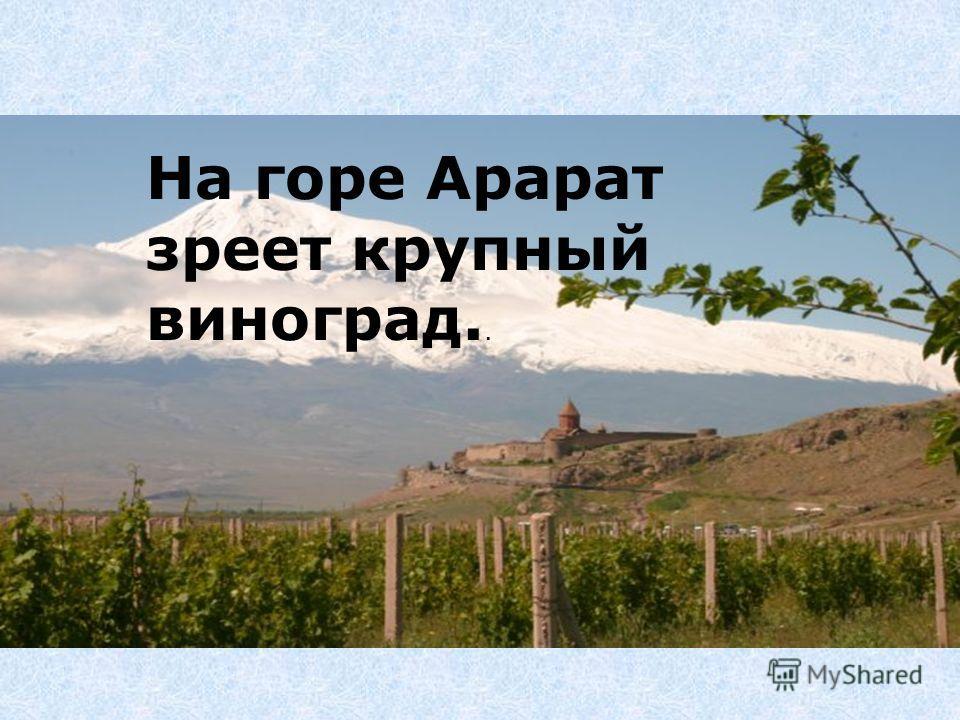 На горе Арарат зреет крупный виноград..