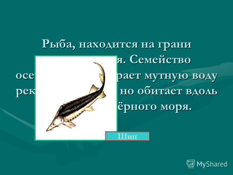 Отгадай обитателя морей Это не рыбы, а млекопитающие. Но они могут находиться под водой очень долго! Чтобы вдохнуть, поднимаются на поверхность. Они дышат через специальное отверстие на голове. Как и другие их родственники, «говорят» друг с другом. И