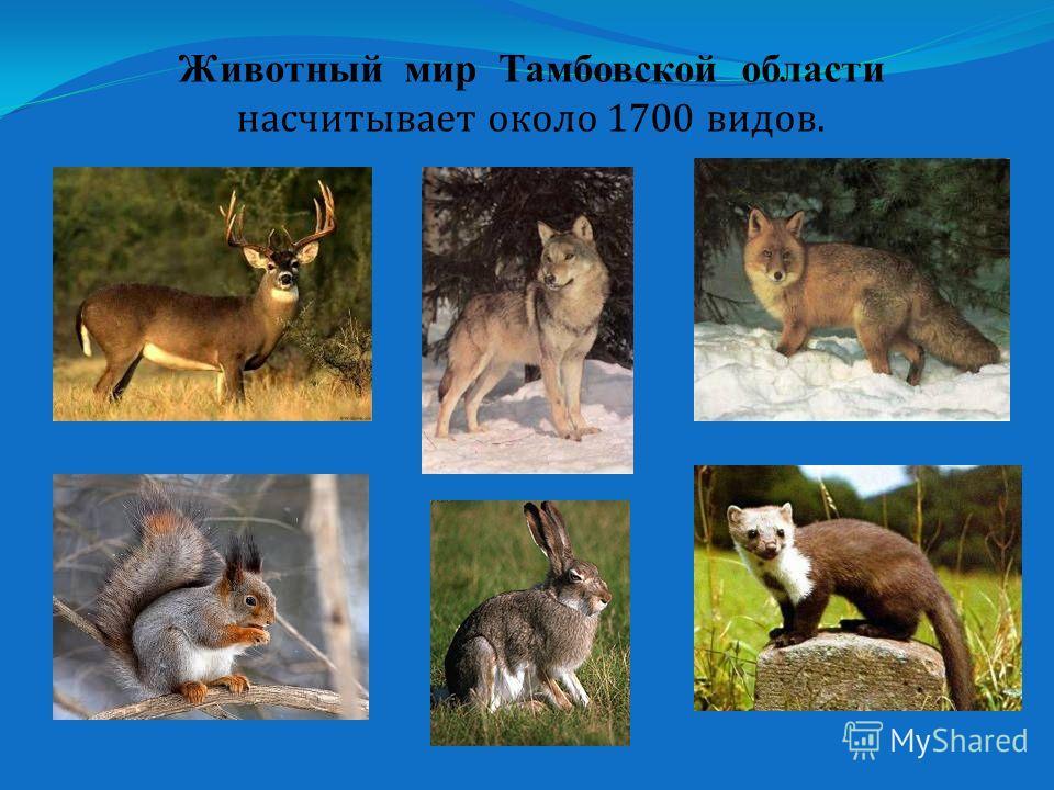 Животный мир Тамбовской области насчитывает около 1700 видов.