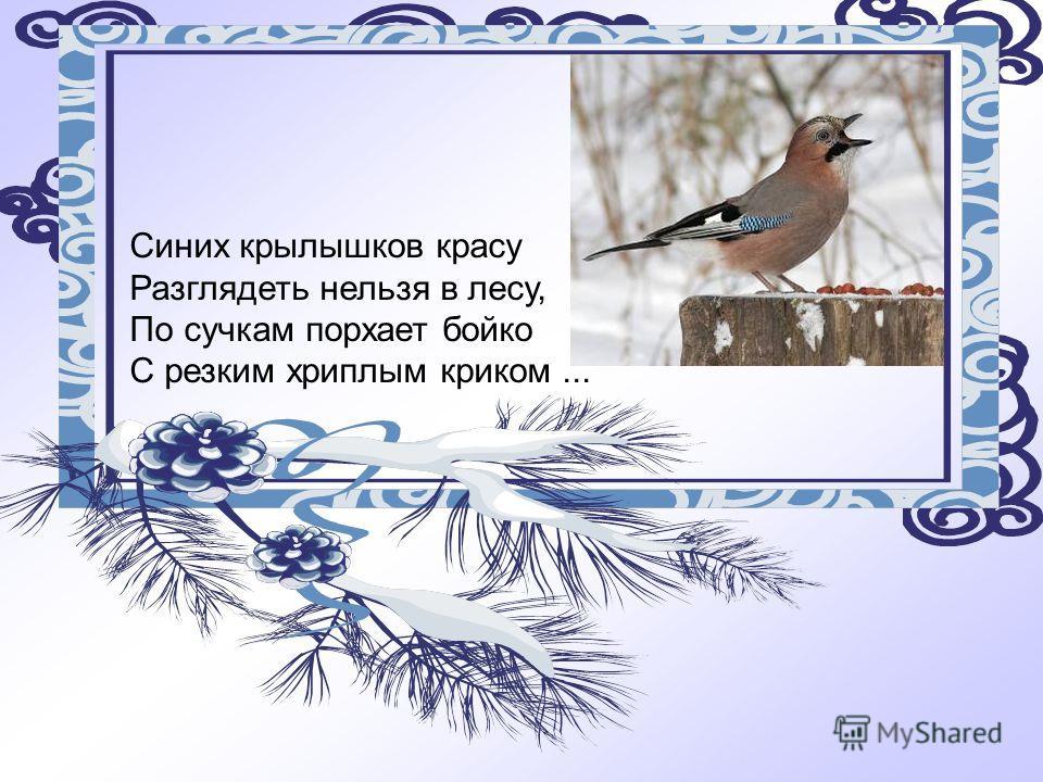 Синих крылышков красу Разглядеть нельзя в лесу, По сучкам порхает бойко С резким хриплым криком...