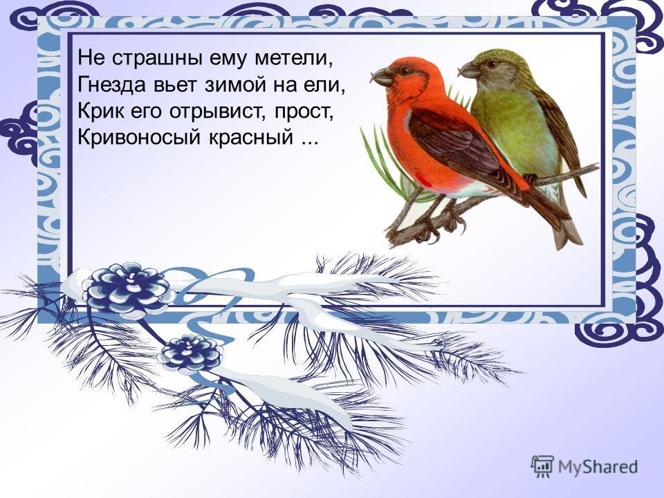 Не страшны ему метели, Гнезда вьет зимой на ели, Крик его отрывист, прост, Кривоносый красный...