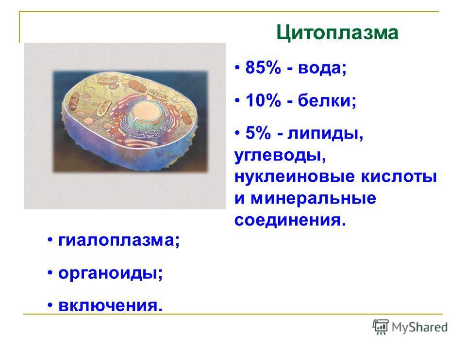 Цитоплазма 85% - вода; 10% - белки; 5% - липиды, углеводы, нуклеиновые кислоты и минеральные соединения. гиалоплазма; органоиды; включения.