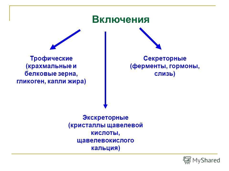 Включения Секреторные (ферменты, гормоны, слизь) Трофические (крахмальные и белковые зерна, гликоген, капли жира) Экскреторные (кристаллы щавелевой кислоты, щавелевокислого кальция)