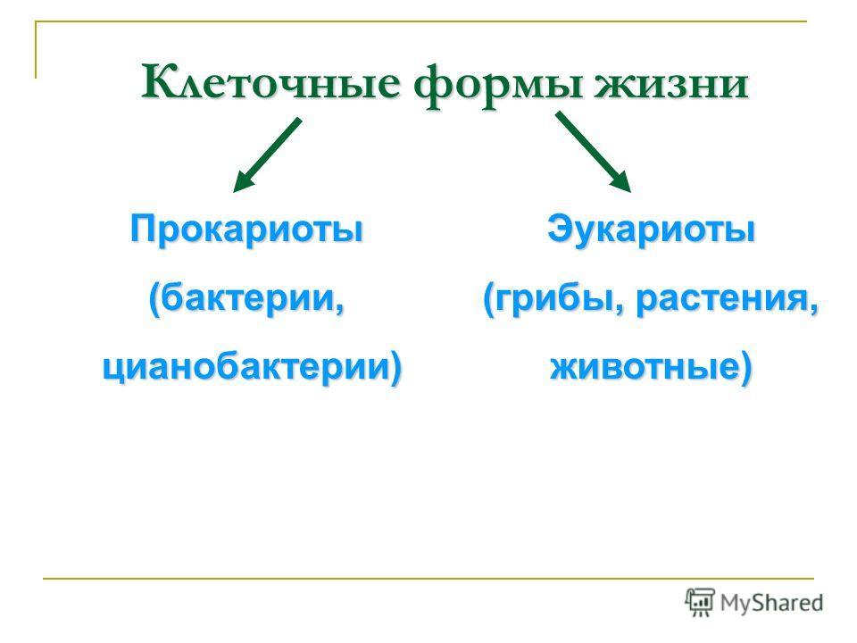 Клеточные формы жизни Прокариоты(бактерии, цианобактерии) цианобактерии)Эукариоты (грибы, растения, животные)
