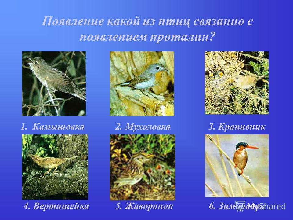 Появление какой из птиц связанно с появлением проталин? 1. Камышовка2. Мухоловка3. Крапивник 5. Жаворонок4. Вертишейка6. Зимородок