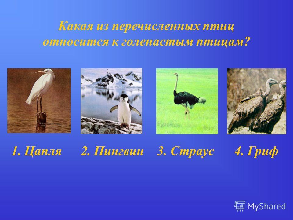 Какая из перечисленных птиц относится к голенастым птицам? 1. Цапля2. Пингвин4. Гриф3. Страус