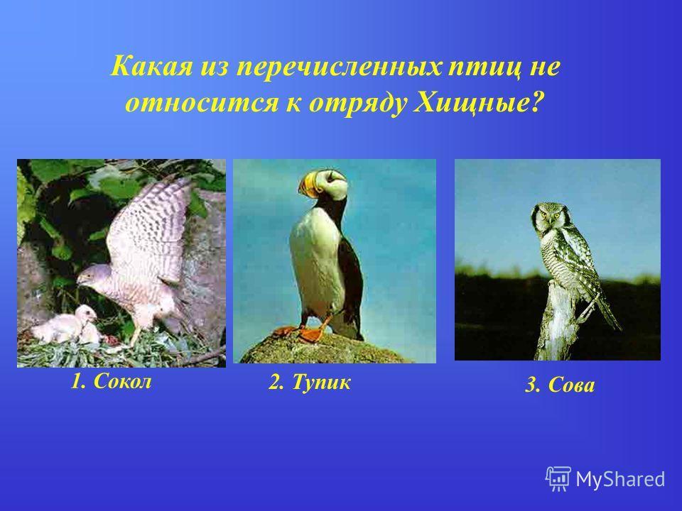 Какая из перечисленных птиц не относится к отряду Хищные? 1. Сокол 2. Тупик 3. Сова