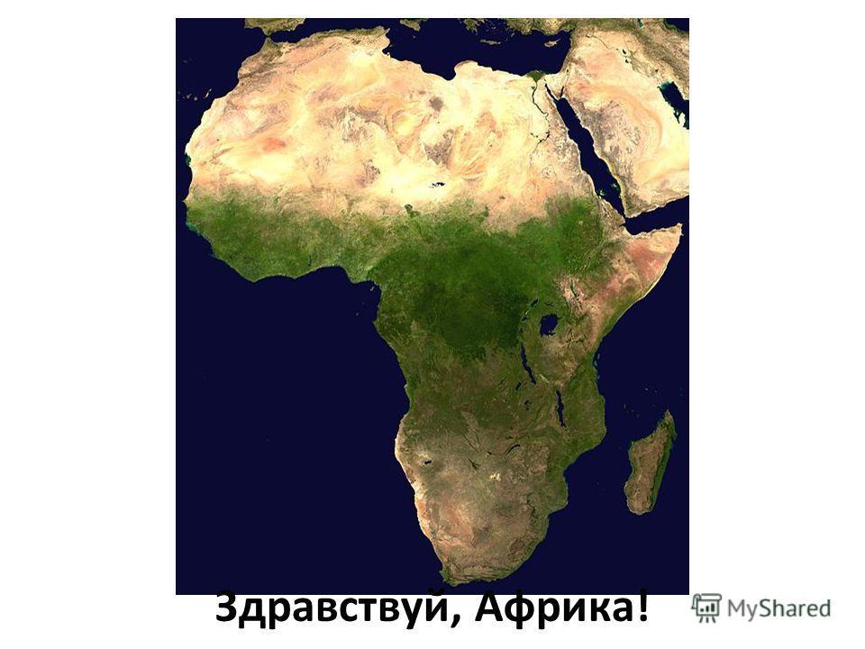 Здравствуй, Африка!