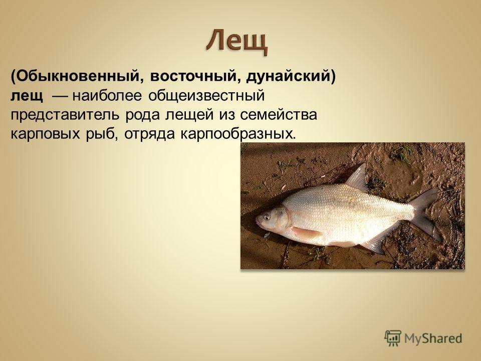 Лещ (Обыкновенный, восточный, дунайский) лещ наиболее общеизвестный представитель рода лещей из семейства карповых рыб, отряда карпообразных.