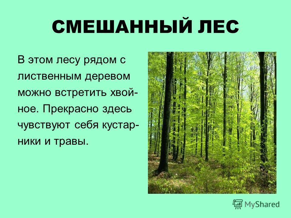 СМЕШАННЫЙ ЛЕС В этом лесу рядом с лиственным деревом можно встретить хвой- ное. Прекрасно здесь чувствуют себя кустар- ники и травы.