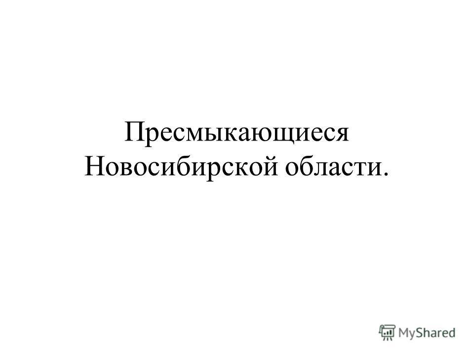 Пресмыкающиеся Новосибирской области.